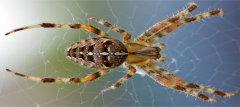 Spider food source control